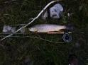flyfishing missoulas upper clark fork river