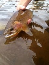 flyfishing on the blackfoot river in the spring