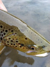 guided flyfishing in missoula