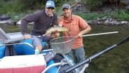 the blackfoot river has some nice brown trout